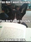 funny-dog-pictures-study-play