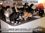 funny-pictures-your-cats-have-a-study-group