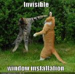 funny-pictures-cat-install-invisible-windows