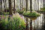 Water-Reflections-of-Peaceful-Forest-With-Cottage-and-Purple-wildflower.jpg