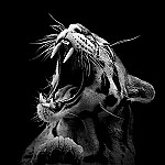 black-and-white-fine-art-animal-portraits-by-lukas-holas-7.jpg