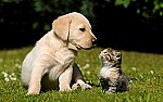 5106_Pure-love-between-a-dog-and-a-cat.jpg